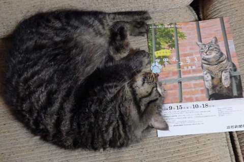山形の猫写真展(岩合光昭の世界ネコ歩き)