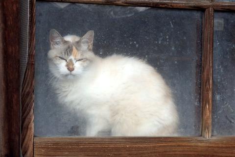 日替猫定食白系
