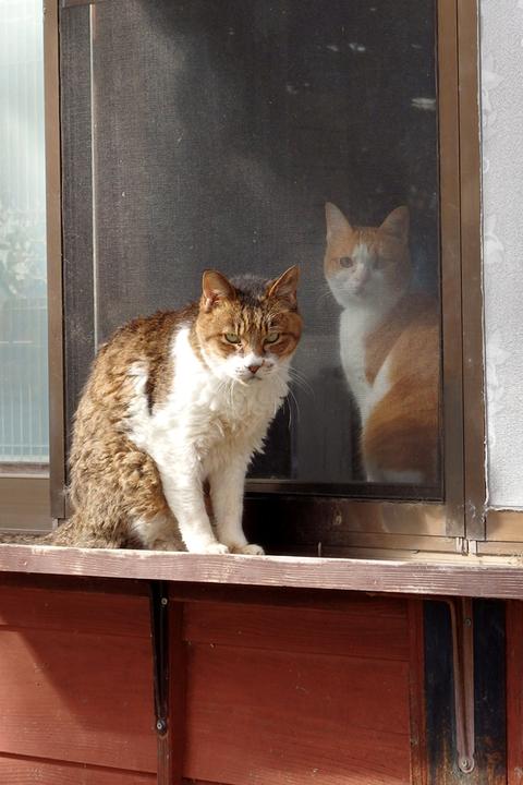 日替猫定食2ニャン