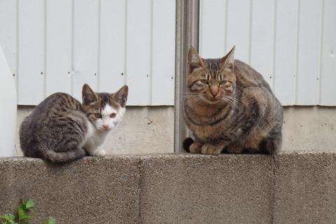 猫端会議んちゃ!