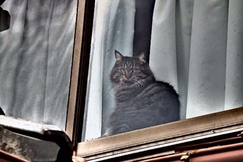 アンジュ猫ラーメン