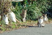 今朝猫ラーメン天スタ