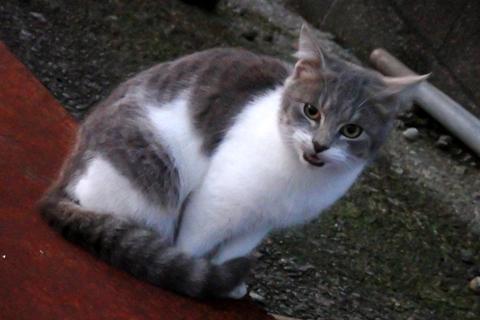笹川肉うどん猫