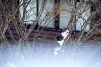 猫の日活動写真其の6 2018/02/24 09:03:01