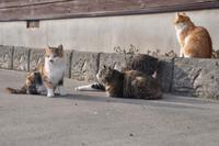 猫活in庄内鶴岡 2018/03/08 10:03:15