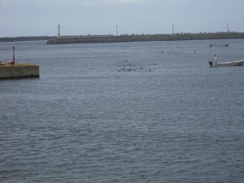 小学校遠泳大会!!