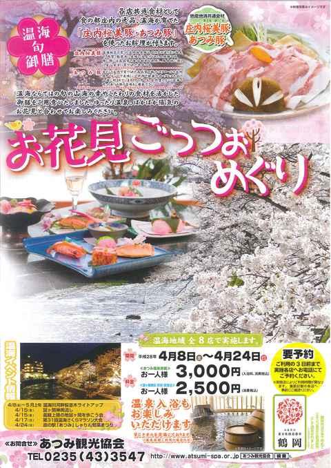 4/9本日の温海川河畔の桜!