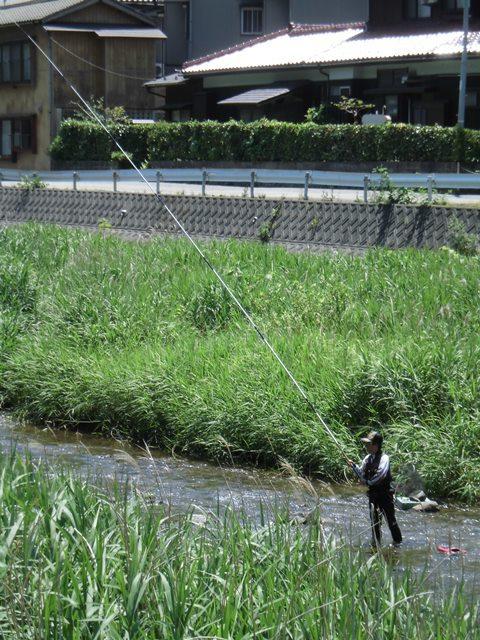 温海川の鮎釣り