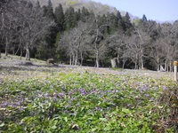 4/25温海川かたくり園へ
