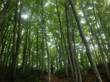 新緑のブナの森で深呼吸♪