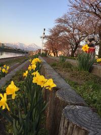 ♬ラズ+鳥海山+桜+花+空♬
