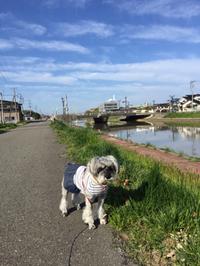 今日もいいお天気です♪( ´▽`)