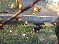河津桜が咲きました〜〜(*'▽'*)