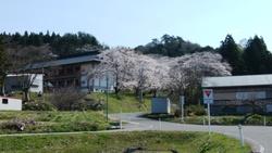 桜満開の白狐山