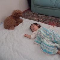 ★お昼寝番犬(o⌒∇⌒o)★ 2012/06/26 22:10:25