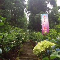 ★紫陽花参道★ 2012/07/06 18:01:30