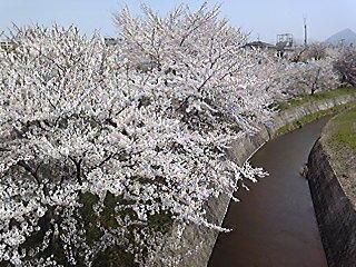 ★お花見スポット<3>★
