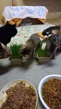 猫草まつり!