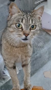 引き続き迷い猫の情報を募集しています!