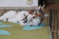 こんな時こそ猫と遊んで!