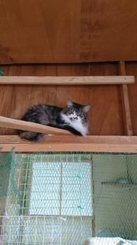 ハウスの美猫はすみっこ暮らし。
