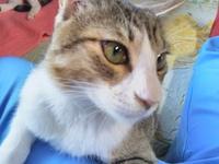 癒やしのスリスリ猫