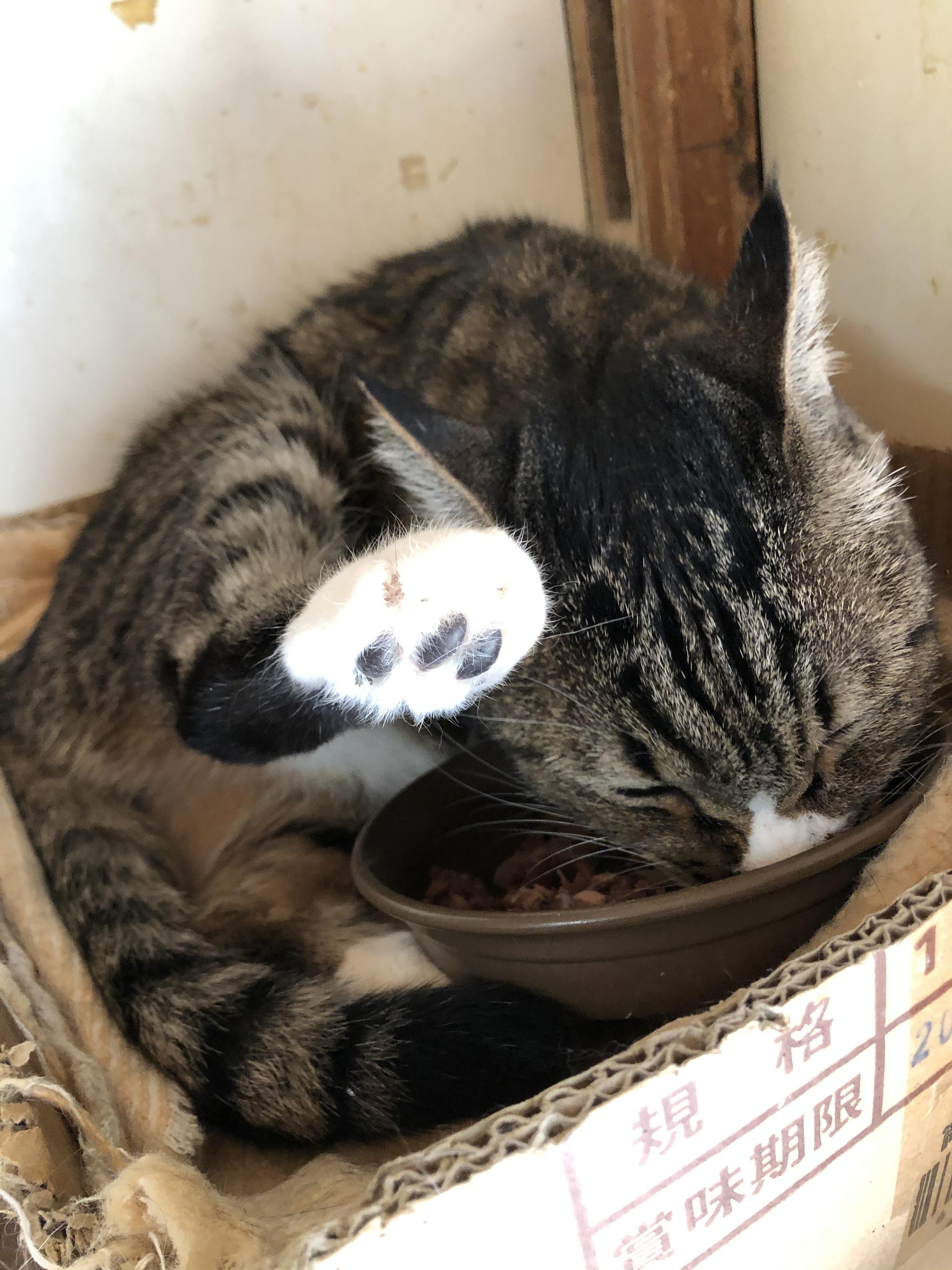 猫は体が柔らかいと言うけれど