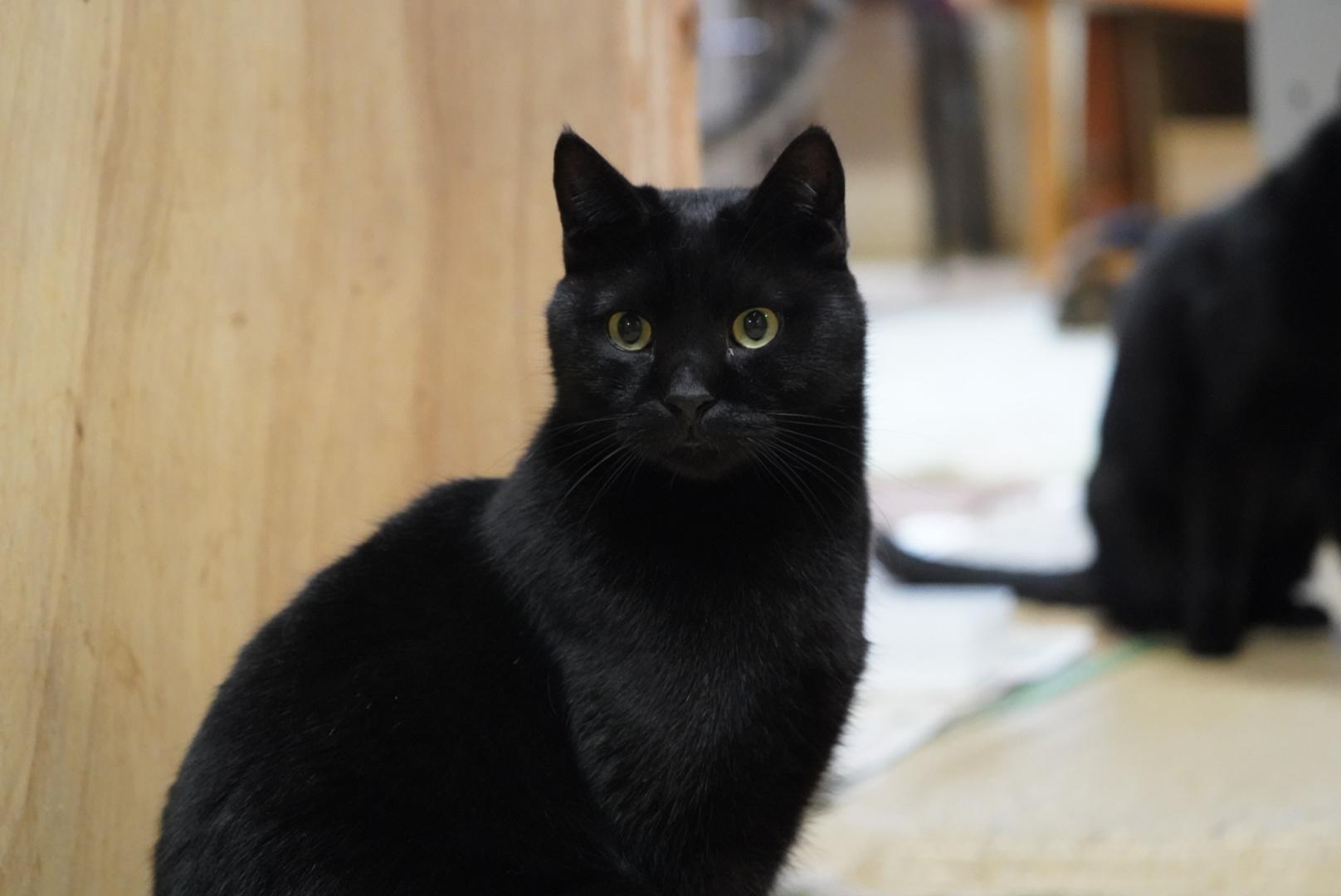 黒猫検証。
