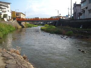 川に鯉?!