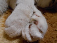 猫川柳の日々