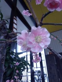 身近なとこから春