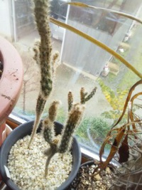 室内植物30