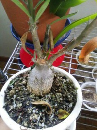 室内植物35