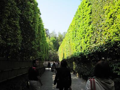 銀閣寺入り口の垣根