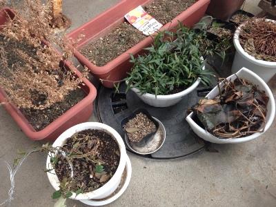 植木と花壇