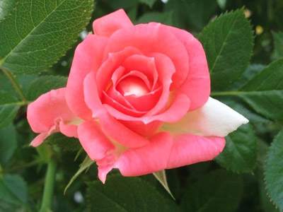 エコー石材2色バラ