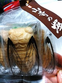 山寺と言えば蝉
