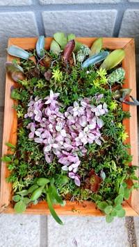 多肉植物の寄せ植え♬