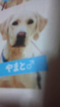視覚障害者に早く盲導犬を…の末っ子3人衆の願い