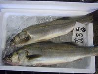 2016.8.20 酒田魚市場