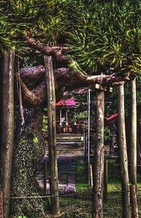 ◇第237話◇御神木と月岡神社