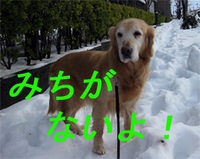 北海道?雪の大草原!