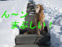 日本一の白鳥飛来地!