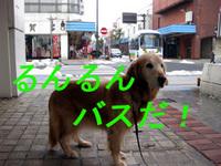 ひさしぶりの中町商店街!