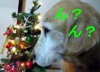 お婆ちゃんのクリスマスツリー!