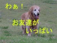 河川敷はわんちゃんのオンパレード!