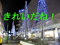 もう一つのクリスマスツリー!