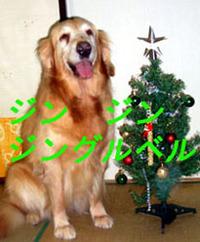 クリスマスツリーの飾りが?