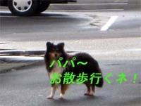 迷子犬は朝からお散歩!
