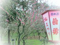 昨日の日和山♪ ~ 日枝神社 梅だより'15~